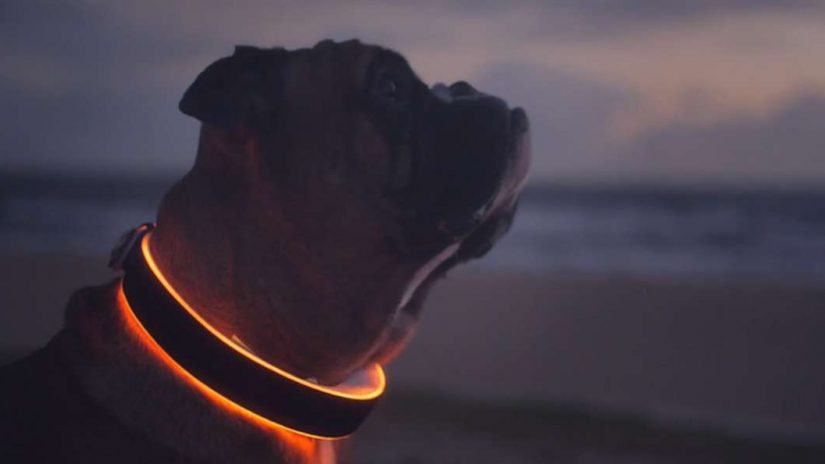 Best Rechargeable Led Dog Collar for Hiking [2021]: TOP 10 Dog Collar Lights